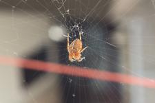 Örümcek ve Ağı