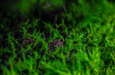 Pentax Yeşili
